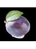 Huile de prune